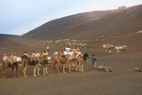 Camel excursion on the island of lanzarote, canary islands, spain