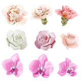 Set of pink, red, pastel color flowers and buds; rose, carnation, orchid Phalaenopsis on white background, digital draw realistic illustration in watercolor style, collection for design, vector
