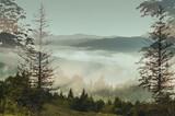 Forest hills of the Carpathian mountains, utensils fog.