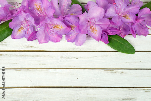 Aluminium Azalea pink rhododendron blossom border on whitewashed wood