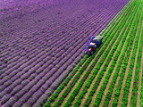 Aerial view of Tractor harvesting field of lavender