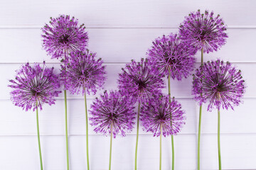 Set of allium flowers on white background