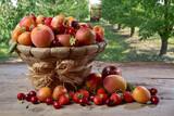 Cesto di frutta con frutteto