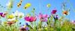 Leinwanddruck Bild - Blumenwiese - Hintergrund Panorama - Sommerblumen