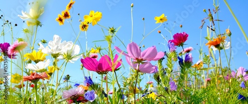 Leinwandbild Motiv Blumenwiese - Hintergrund Panorama - Sommerblumen