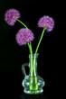 Three purple Allium flowers in a decorative vase against black background