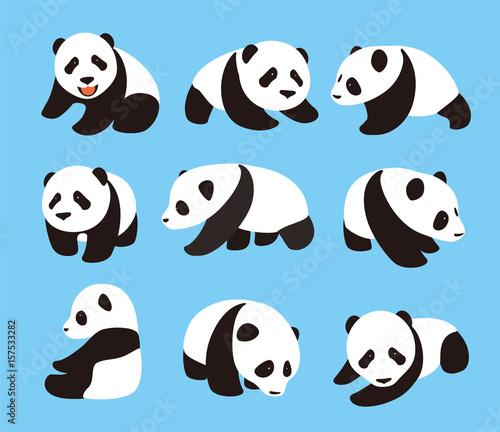 Fototapeta cute panda baby set, flat design, vector illustrator