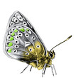 butterfly side view with the spots on the wings are grey, yellow and green colors, sketch vector graphics color picture