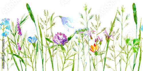floral-seamless-border-of-a-wild-flowers-and-herbs-on-a-white-background-buttercup-clover-bluebell-vetch-timothy-grass-lobelia-spike-watercolor-hand-drawn-illustration
