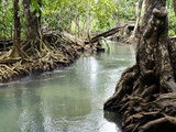 The river in the mangrove forest