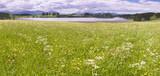 Blumenwiese im Frühling im Allgäu bei Füssen