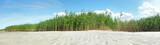 Schilf am Sandstrand