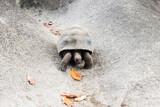 giant tortoise outdoors on seychelles