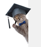Cat with black graduation cap looks thru a magnifying lens. Isolated on white background