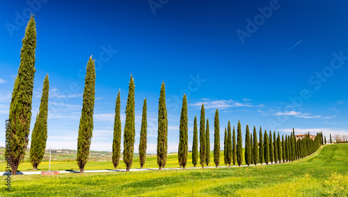 Deurstickers Toscane Beautiful hills of Tuscany in spring with cypresses