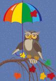 Owl under umbrella