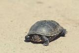 Tortoise walking slowly on the road