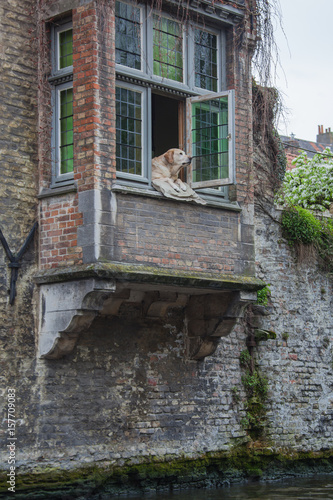 Keuken foto achterwand Brugge Old balcony on the brick wall above the canal occupied by local dog in the famous medieval neighborhood of Bruges (Brugge), Belgium