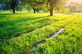 Feldweg durch eine Wiese mit Bäumen bei Sonnenuntergang im Frühling