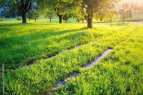 In de dag Pistache Feldweg durch eine Wiese mit Bäumen bei Sonnenuntergang im Frühling