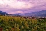Felder in Österreich