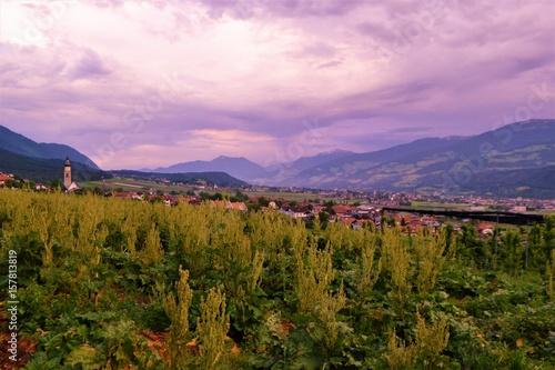 Poster Lichtroze Felder in Österreich