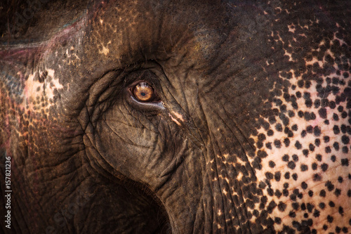 Beautiful close up eye of an elephant in Chitwan Park, Nepal. Poster