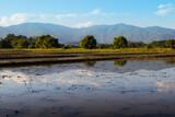 rice field thailand mountains