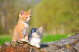 Small kittens