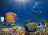 Four divers among fish. Red Sea - 158055430