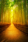 Fototapeta Bambus - Path in bamboo grove, Sagano in Arashiyama at sunset. Kyoto forest is the second most popular tourist destination and famous phonetic stations in Japan. Meditative listening concept. Vertical shot. © bennymarty