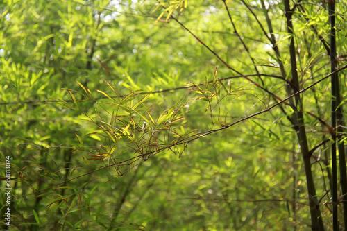 Foto op Plexiglas Landschappen bamboo