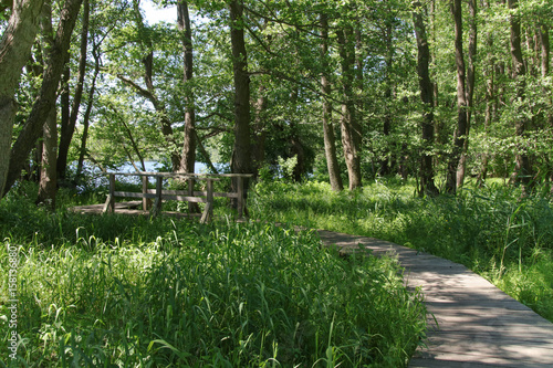 Wandernweg durch Feuchtwiesen, Wald, Bohlenweg, Holzbrücke Poster