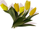 five yellow tulip flowers with shadow