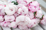 Fototapety White and pink peony. Bouquet, valentine