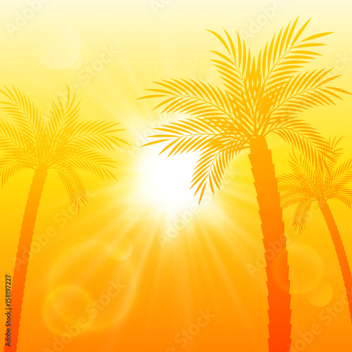 Summer background with palm trees silhouettes