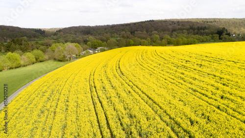 Fotobehang Oranje Rapsfeld voll Gelb von leicht oben