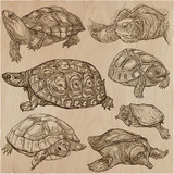 Turtles - An hand drawn vector collection. Tortoise. Set of hand drawings. Line art. - 158204449