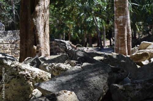 Tuinposter Weg in bos Reptilian