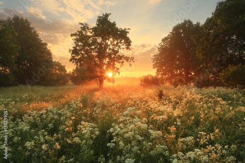 Fotobehang Zomer Summer scene