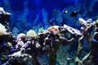 sea aquarium background