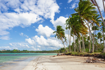 Paradise on Earth. Tropical beach, green palm trees, azure sea, sand. Vacation concept. Dominican Republic, Las Galeras.