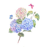 Watercolor branch of blooming hydrangeas and butterflies