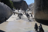 Südafrikanische Pinguine