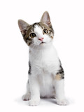 Sitting kitten with harnas