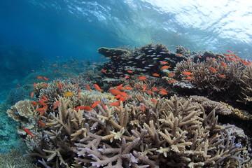サンゴと海中景観2