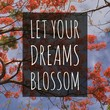 "Inspirational motivational quote ""Let your dreams blossom."" On orange flowers background."