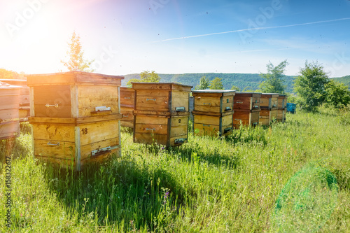Aluminium Bee Hives in an apiary with bees flying to the landing boards. Apiculture.