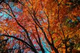 autumn in karuizawa