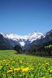 Blumenwiese in den Alpen